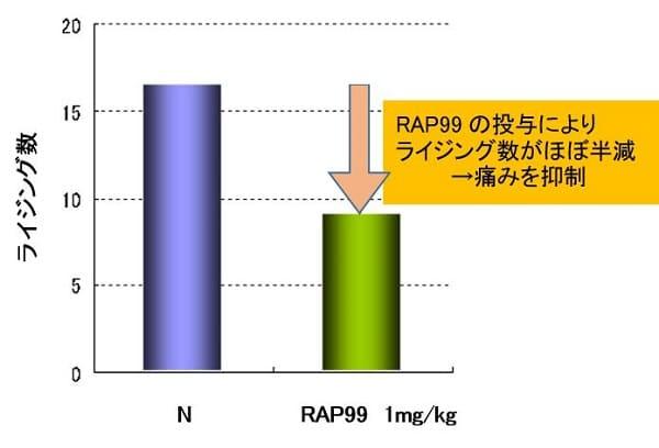 RAP99の投与によりライジング数がほぼ半減した