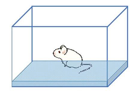 ラット水浸ケージのイメージ